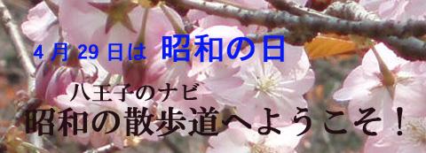 八王子のナビ    昭和の日の散歩道